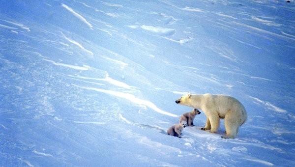 потепление или новый ледниковый период