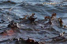 Экологи нашли пропавшую нефть