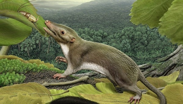 Генетические паразиты помогли млекопитающим