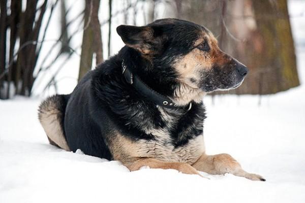 собака восьмой год ждет хозяина