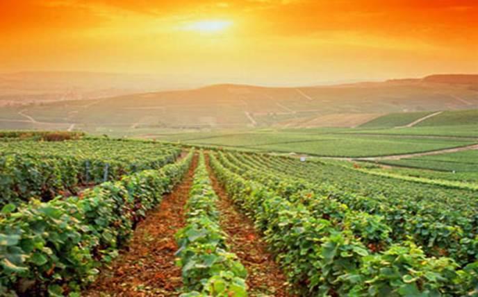 Агропромышленный сектор Испании