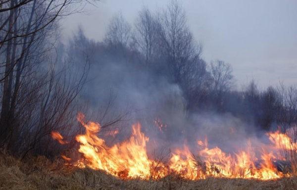 На юге Забайкалья свирепствуют пожары